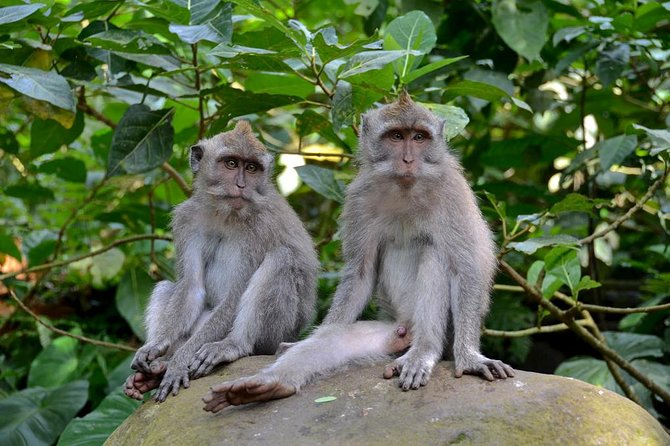 Ubud particular: Batubulan Village, Tirta Empul Templo, Floresta do Macaco com almoço, ,