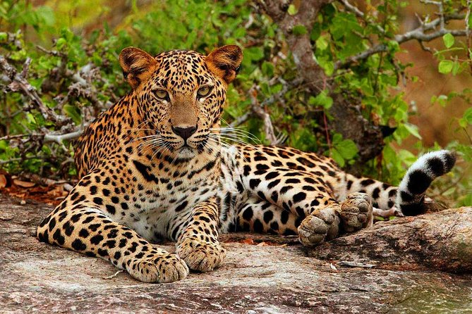Private Day trip to Yala national park for half day Safari from Colombo/Negombo, Negombo, SRI LANKA