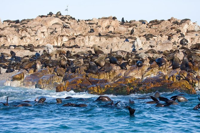 Leave Cape Town behind to take a marine cruise where you can see great white sharks, whales, Cape fur seals and a variety of seabirds. On a ±2-hour cruise from Gansbaai, ply the waters of Shark Alley to see great whites as they hunt for seal snacks. Then travel to hotspots to see whales, African penguins and other seabirds around Dyer Island and Geyser Rock. Expert guides show you the best of this amazing South African marine wilderness.
