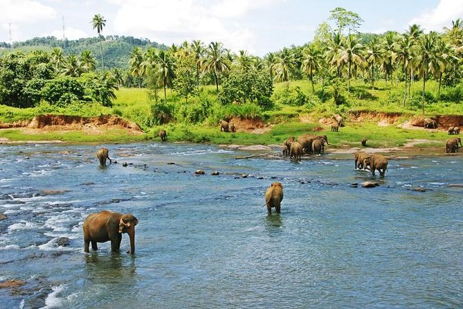 Private Xishuangbanna and Wild Elephant Valley Day Tour from Jinghong, Jinghong, CHINA