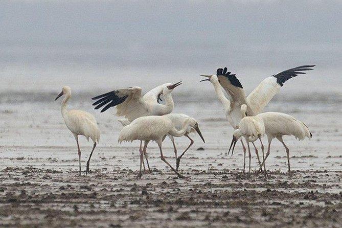 Bird Watching Tour at Nanji Hill Poyang Lake Nature Reserve From Nanchang, Nanchang, CHINA