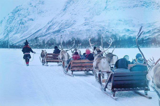 Reindeer Sledding and Sami Culture Including Lunch in Tromso, Tromso, NORUEGA