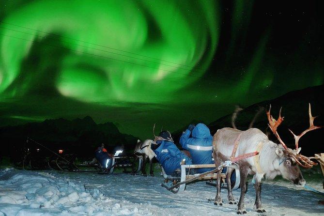 Northern Lights and Reindeer Sledding in Tromso, Tromso, NORUEGA