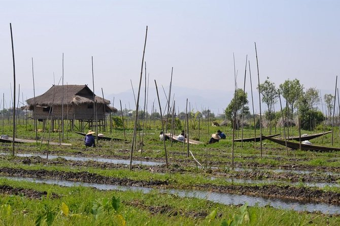 Get out in the fields and meet with the farmers of the lake. This leisure walk across the villages on the shore will lead you among rice fields and fields where you will give a hand to the farmers. Depending on the season, you will discover the different crops that grow around the lake
