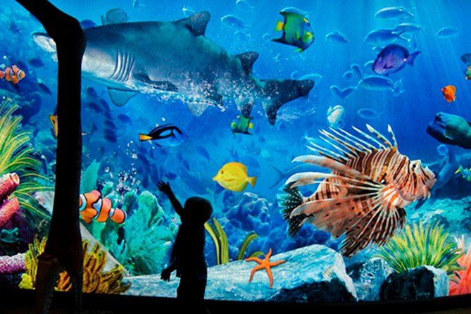 MÁS FOTOS, Sea Life Ocean World - Entrada solamente