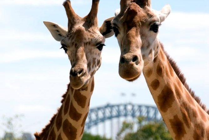 Enjoy a fun-filled day cruising through beautiful Sydney Harbour and visiting Taronga Zoo. See iconic Sydney landmarks from the water, take a ride on the Sky Safari Gondola and meet the animals of Taronga Zoo.