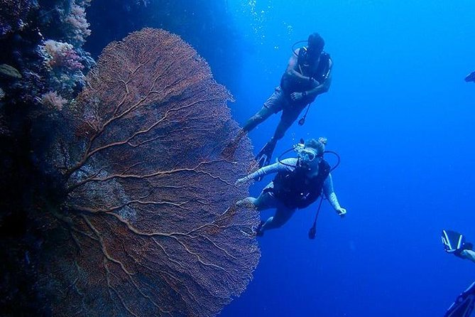 Enjoy 3 days of diving in Beautiful Palau with Neco Marine. Witness spectacular diving and the amazing Jellyfish lake with our local experts.