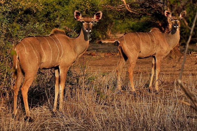 Chobe day trip from Livingstone (Zambia), Livingstone, ZIMBABUE