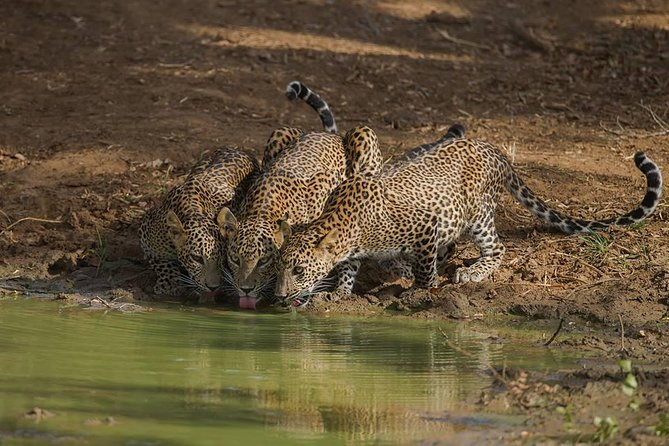 All Inclusive Private Full Day Safari in Yala National Park with Lunch, ,