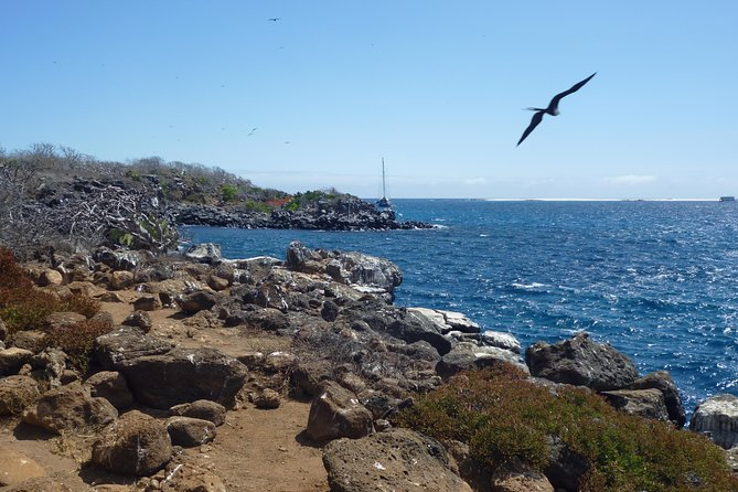 Take a full-day trip to one of the most beautiful uninhabited islands in Galapagos. The ideal spot to observe native Galapagos birds, the island is home to colonies of Blue Footed Boobies and Frigate Birds. This place is the chosen spot for birds mating rituals and nesting depending on the time of the year. North Seymour also hosts a colony of sea lions. Activities during the day-tour include hiking, wild life viewing and snorkeling in Bachas beach. A box lunch is also included as well as pick-up and drop-off from your hotel. A must visit during your Galapagos trip.
