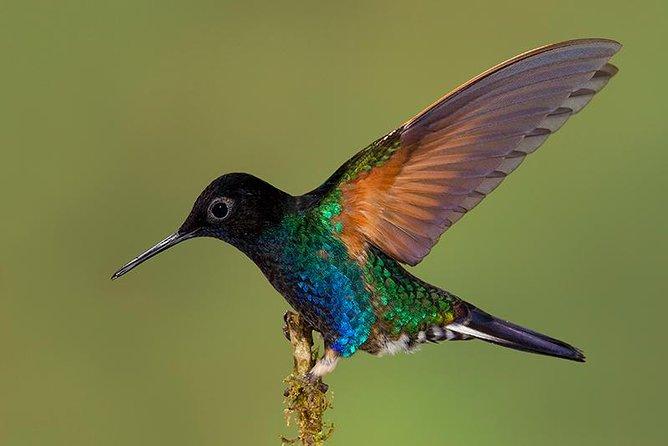 Expedición sobre el colibrí: RECORRIDO FOTOGRÁFICO PRIVADO con todo incluido, Quito, ECUADOR