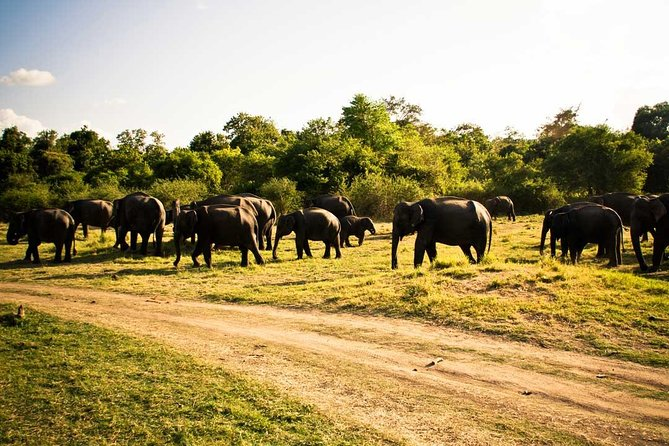 Jeep Safari To One Of a National Park Where You see Lot Of Animals On that day, Sigiriya, SRI LANKA