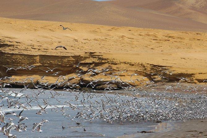 Paracas National Reserve and Tambo Colorado from Puerto San Martín, Paracas, PERU