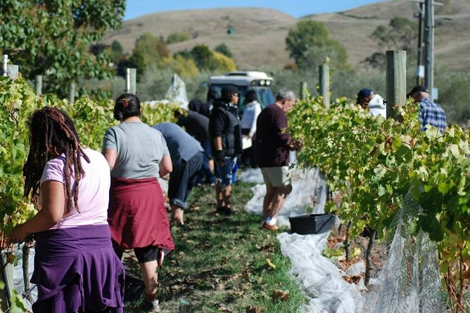 Winery Tour at Ash Ridge, Hastings, New Zealand