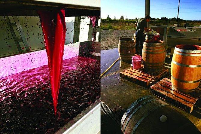 Winery Tour at Ash Ridge, Hastings, NOVA ZELÂNDIA