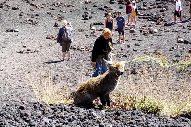 Etna Morning Jeep Tour, ,