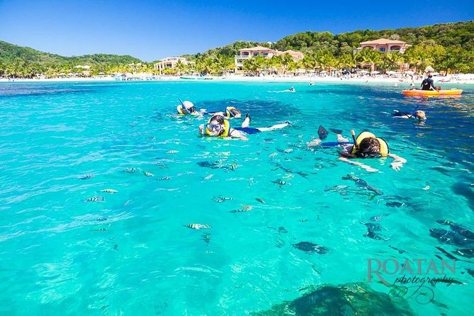 Roatan Excursion: Beach Break/ Plus Sloth Park and Snorkel Adventure, Roatan, HONDURAS