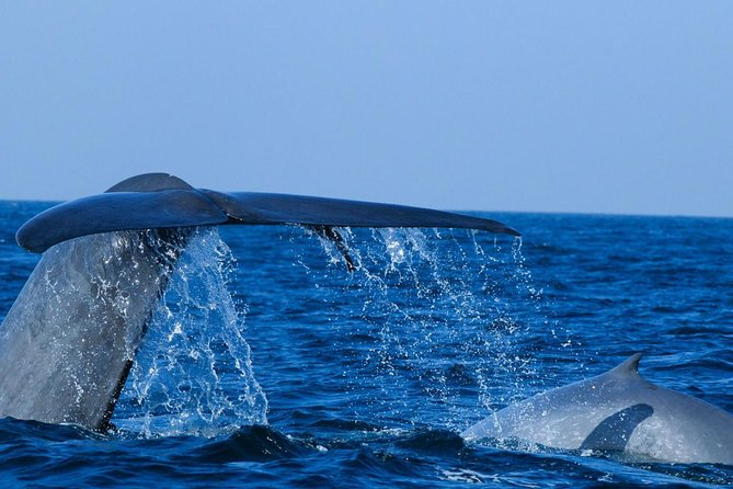 Mirissa Whale Watching ( Vehicle Only Private Day Trip From Colombo), Galle, SRI LANKA