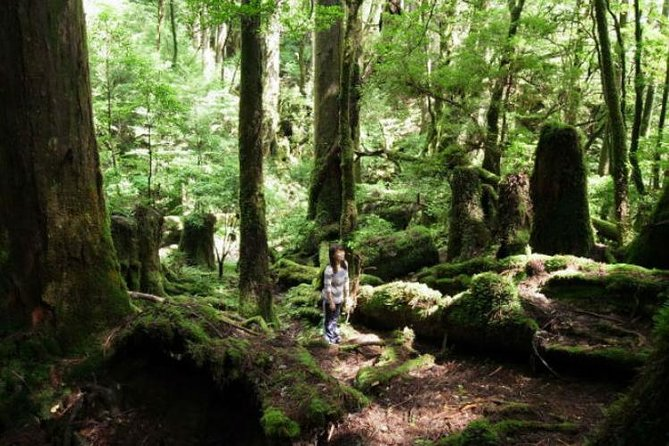 "Yakusugi is the Japanese cedar on the island of Yakushima.On this tour, enjoy walking in the ancient cedar forests of Yakushima island.The forests of Yakushima island are well-known as the model of the Miyazaki Hayao film ""Princess Mononoke."""