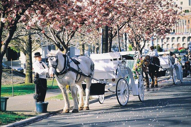 45-Minute Beacon Hill Park Carriage Tour, Victoria, CANADA