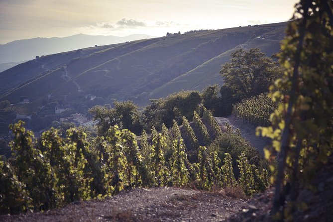 On the tour, you will discover the history of wine in this essential region and enjoy some great wine tastings with Syrah-based appellations (Côte-Rôtie, Saint-Joseph) and Viognier-based appellations (Condrieu).
