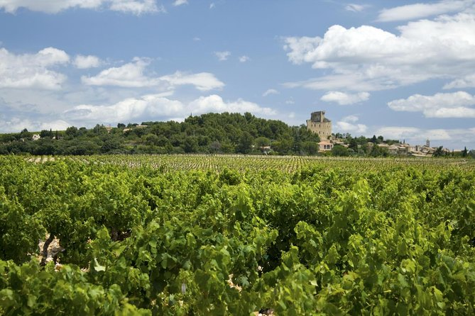 Full private day Avignon Chateuneuf du pape wine tasting, Arles, FRANCIA