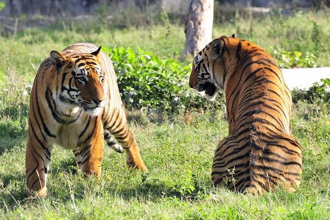 Get the most out of your time in India by going on a comprehensive 5-Day Golden Triangle and Ranthambhore Tiger Safari Tour with Commercial one-way Flight. You'll combine historic buildings with natural beauty, wildlife, and shopping. Save hours researching accommodation and booking private transport by having 4 nights at a hotel, breakfast, select meals, and all transfers included and see many of India's top attractions, including Amber Fort, City Palace, and Jal Mahal, Ranthambore National Park and the Taj Mahal, Agra Fort.