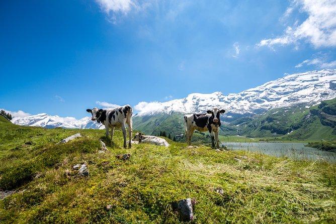 Billete para el teleférico del Monte Titlis en Engelberg, Lucerna, SUIZA