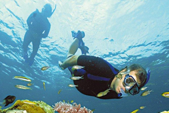 2-hour Snorkelling in Los Cancajos, La Palma, ESPAÑA