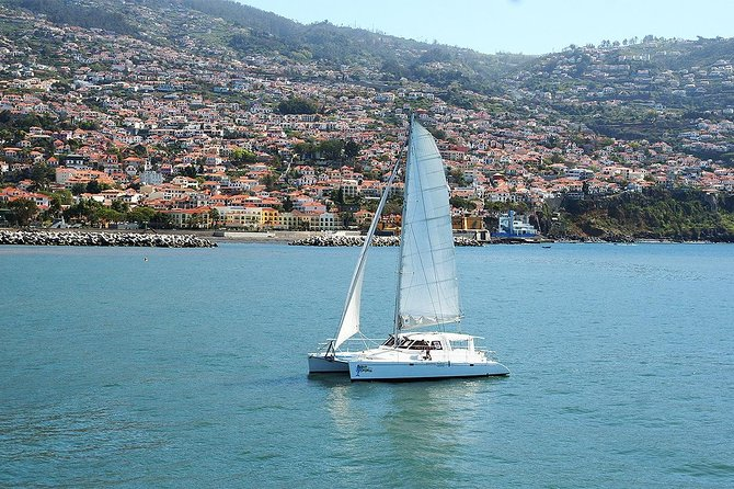 Madeira Dolphin and Whale Watching on a Luxurious Catamaran, ,