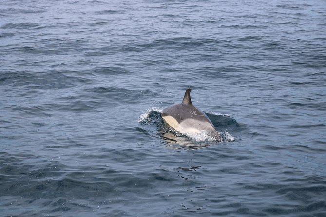 Avistamiento de ballenas, Terceira, PORTUGAL