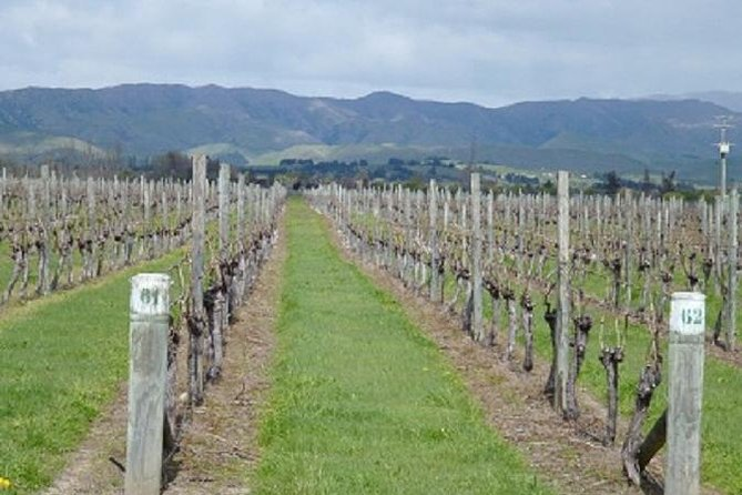 Picton Shore Excursion Marlborough Wine Region Small-Group Tour, Picton, NOVA ZELÂNDIA