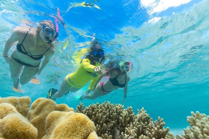 Ocean Safari Great Barrier Reef Experience in Cape Tribulation, Cape Tribulation, AUSTRALIA