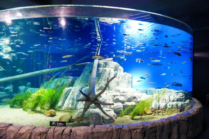 An aquarium that allows you to see many freshwater fish in their natural habitat. The aquarium also has a zone made for the nearby Chitose River where you can directly see inside the river and the fish that lives there.