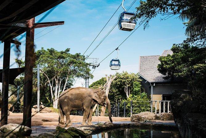 Ingresso de entrada geral do Zoológico de Taronga em Sydney e experiência Wild Australia, Sidney, Austrália