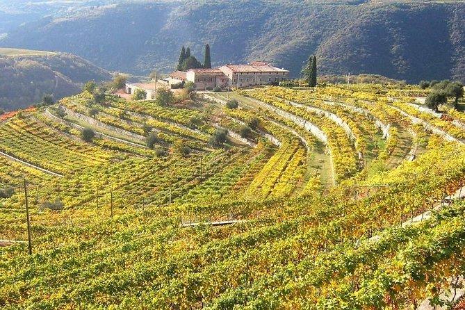 Wine tasting, Valpolicella cellar visit, Amarone and red wines region day tour, Padua, Itália