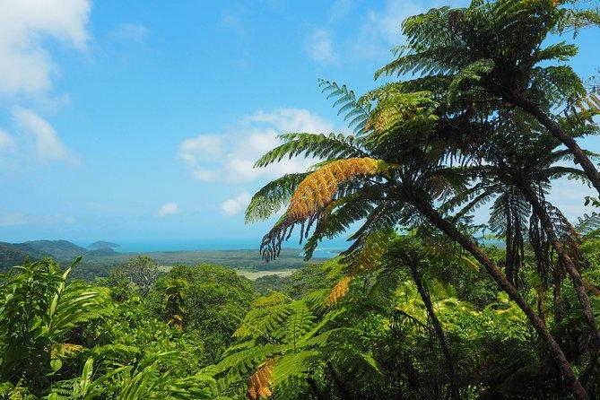 Cape Tribulation, Daintree Rainforest and Wildlife Tour, Cape Tribulation, AUSTRALIA