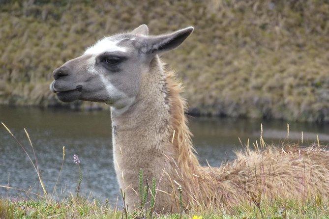 Excursión de medio día al Parque Nacional de Cajas, Cuenca, ECUADOR