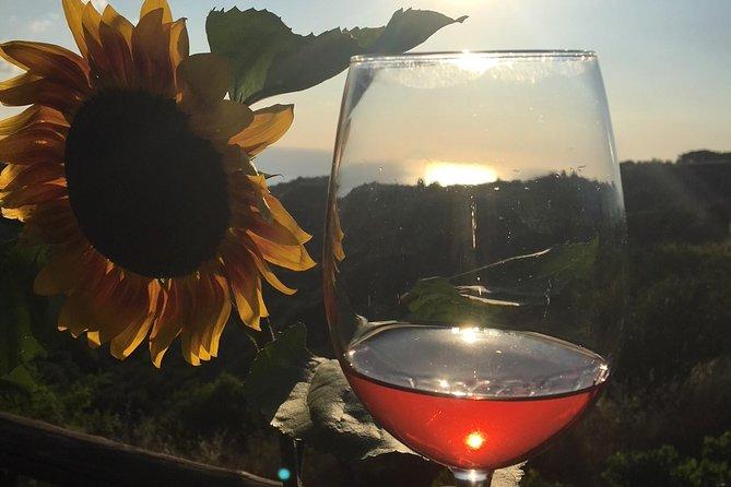 MÁS FOTOS, Wine and Food Tasting in the vineyard