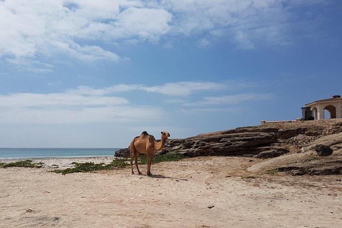 West Salalah Tour - Half Day - Private - By Beautiful Salalah, Salalah, OMÃ