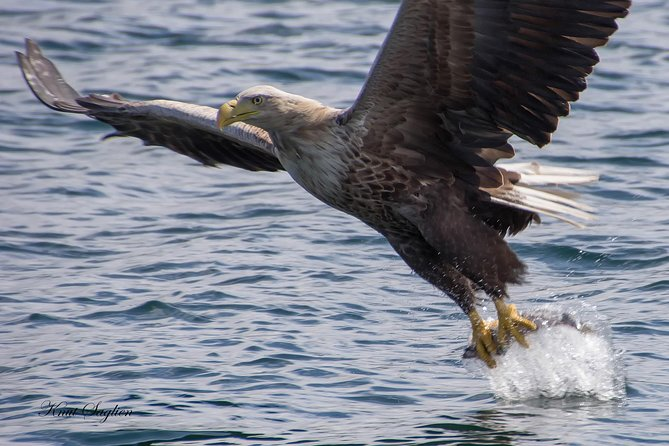 White-Tail Eagle Safari by Zodiac RIB boat from Bergen, Bergen, NORWAY