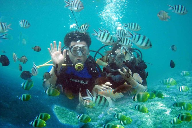 Discover Bali from underwater experience which bring you to another paradise. Marvel at the wide variety of tropical fish and live coral flora and fauna. Enjoy your private pick up by professional driver and lunch at local restaurant.