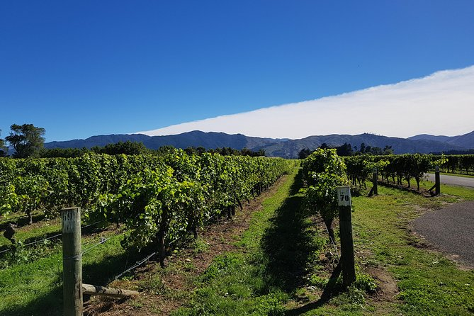 Explore New Zealand's premier wine region on this half-day tour from Blenheim departing at 10am. Visitfour different wineries in theMarlborough wine region, stroll through the vineyards, and sample wines such asSauvignon Blanc andPinot Noir.This small-group tour is limited to 11 people and includes hotel pickup and drop-off.<br><br>One of the stops will be at a winery resturant where you can enjoy lunch at your expense