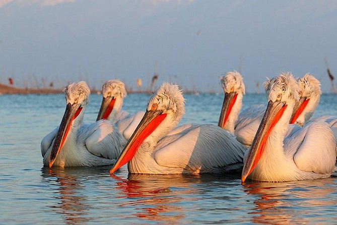 On this tour we will explore the birdlife in the spectacular steppes and cliffs of Cape Kaliakra and the Bulgarian El Dorado of waterbirds – Srebarna Nature Reserve. The tour starts from Varna or any of the resorts/ settlements to the north of Varna.<br><br>Best time: May - July