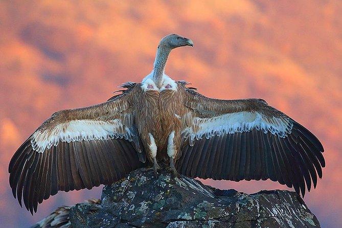 Two-day Birding Trip: The Eastern Rhodopes & Sakar, ,