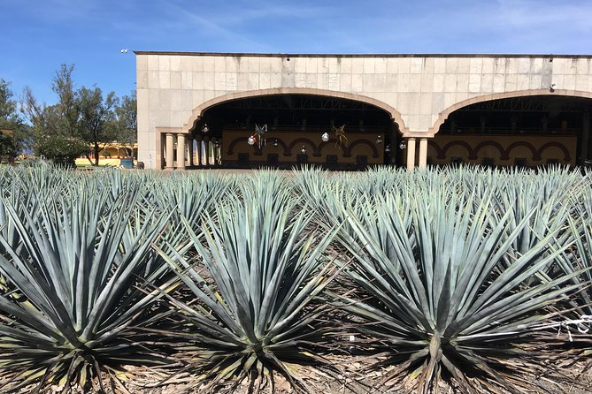 Commercial and Craft Tequila Experience, Guadalajara, MÉXICO