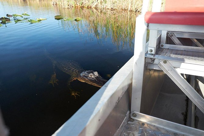Airboat Ride and Nature Walk with Naturalist in Everglades National Park, Miami, FL, UNITED STATES