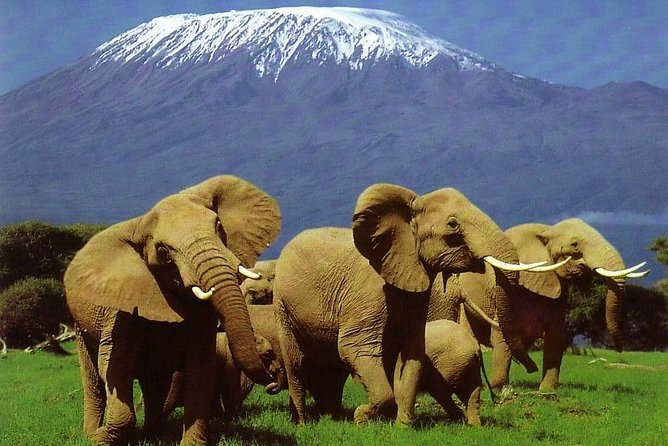 Experience the wonderful views of Mt. Kilimanjaro and take photos of the wildlife against the background of the mountain. Isn't this wonderful? This park also has large herds of elephants which makes the experience even more fantastic and great photo taking moments. Don't miss out.