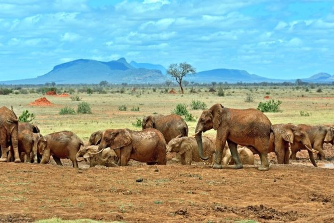 This private, 3-day trip to Tsavo East National Park offers you the opportunity of safari life with just your party. Travel by a customized safari car with a pop up roof, so you can get up close to more of what wildlife the park has to offer.<br><br>You will spend the night at the luxury Voi wildlife lodge complete with stunning views of the park and animals coming to the water hole.<br><br>NOTE; This is not a camping safari and its also private for your party only
