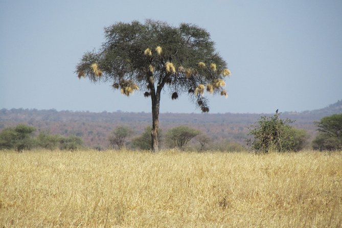 Safari de acampada de 6 días: Lago Manyara, Serengeti, cráter de Ngorongoro y Parque Nacional Tarangire desde Arusha, Arusha, TANZANIA